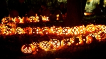 rows of jack olanterns